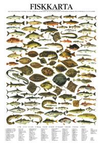 Fiskkarta, poster