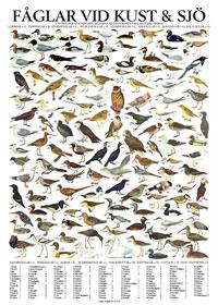 Fåglar vid sjö och hav, poster